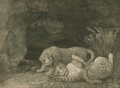 Tigers At Play Print by George Stubbs