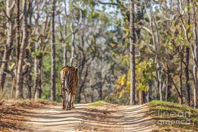 Animals Digital Art - Tigress Walking In Sal Forest Pench N P India by Liz Leyden