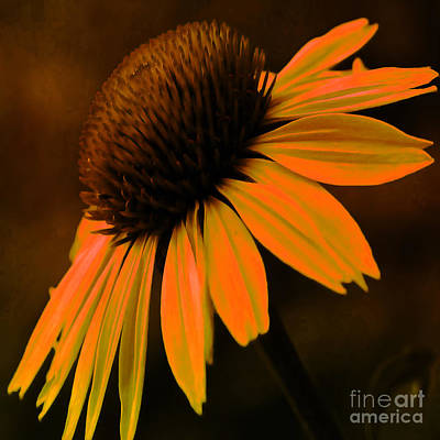 Abstracted Coneflowers Digital Art - Tiki Torch Coneflower by Beverly Guilliams