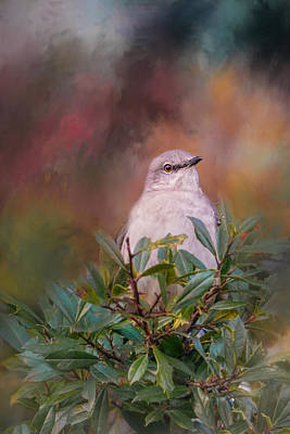 Mockingbird Photograph - Tilda In The Holly by Jai Johnson