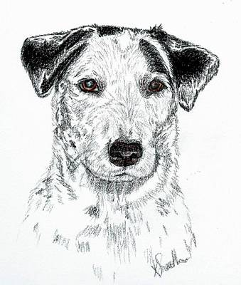 Cattle Dog Drawing - Tinker Sketch by Kirsten Sneath
