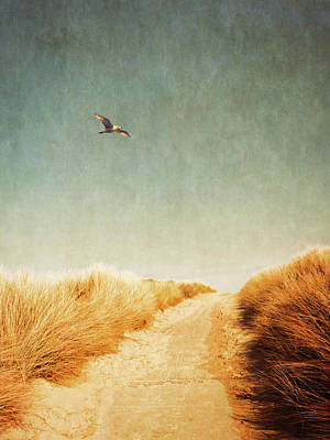 Flying Seagull Photograph - To The Beach by Wim Lanclus