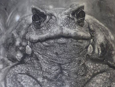 Toad Print by Adrienne Martino