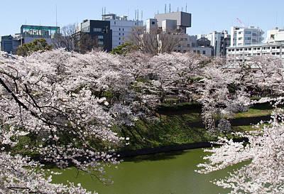 Sakura Photograph - Tokyo Cherry Blossoms by Lise-Lotte Larsson