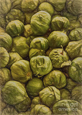 Vegetable Market Drawing - Tomatillos by Janice Rae Pariza
