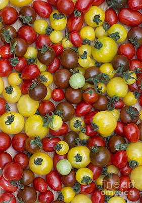 Elongated Photograph - Tomatoes  by Tim Gainey