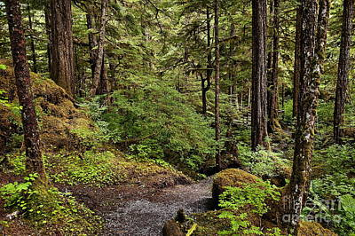 Tongass National Forest Print by John Greim