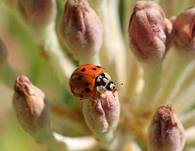 Ladybug Photograph - Top Of The Morning by Donna Kennedy