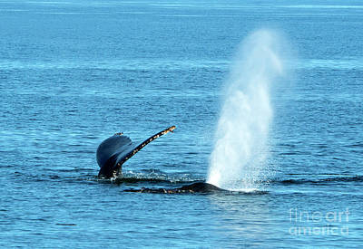 Whale Photograph - Top To Bottom by Mike Dawson