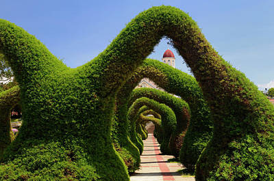 Topiary Garden Archways And Path In Zarcero Costa Rica Leading T Print by Reimar Gaertner