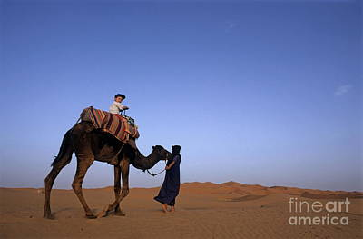 Touareg Man Leading Boy Riding Camel In Sahara Desert Print by Sami Sarkis