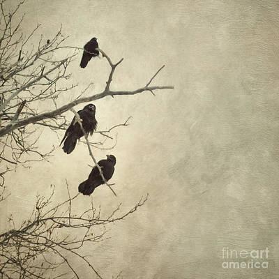 Raven Photograph - Town Gang by Priska Wettstein