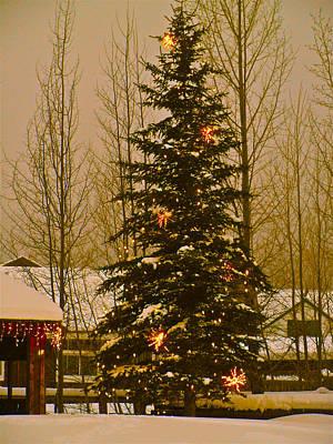 Bob Berwyn Photograph - Town Tree by Bob Berwyn