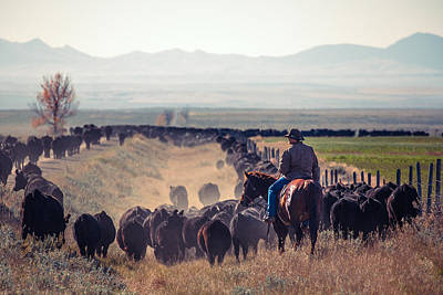 Cattle Drive Photograph - Trailing The Herd by Todd Klassy