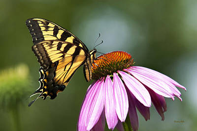 Tranquil Butterfly Print by Christina Rollo