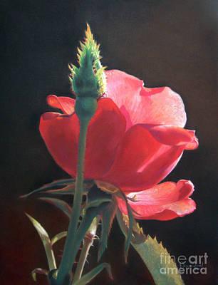 Translucent Rose Print by Nanybel Salazar