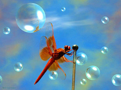 Transparent Red Dragonfly Print by Joyce Dickens