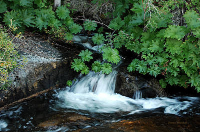 Babbling Photograph - Traveling Downstream by Donna Blackhall