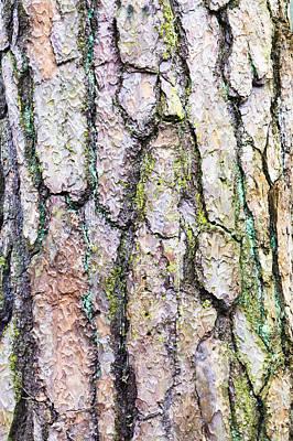 Lichen Photograph - Tree Bark by Tom Gowanlock