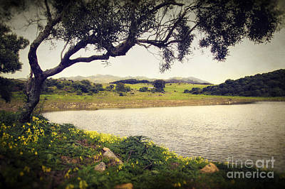 Tree By The Lake Print by Carlos Caetano