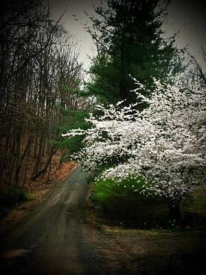 Tree By The Road Print by Joyce Kimble Smith