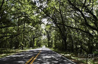 Nature Photograph - Tree Covered Road by D Hackett