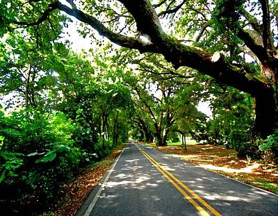 Tree Covered Road Original by Michael Thomas