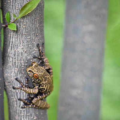 tree frog in tropical Amazonian rain forest Print by Dirk Ercken