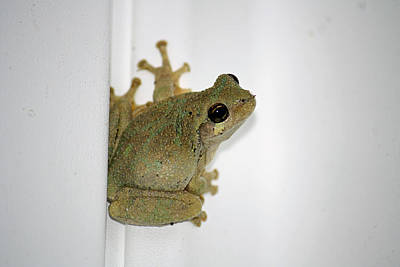 Spring Peepers Photograph - Spring Peeper by Tammy Goad