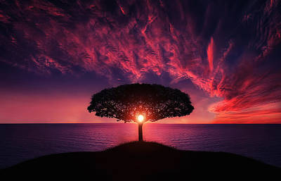 Tree In Sunset Print by Bess Hamiti