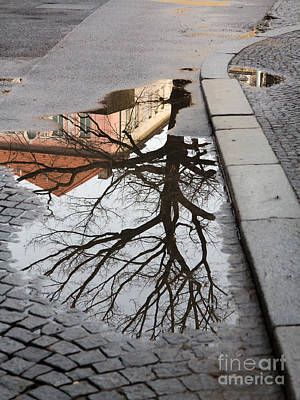 Tree In The Puddle Print by Michal Boubin
