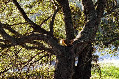 Tree King Print by Donna Blackhall