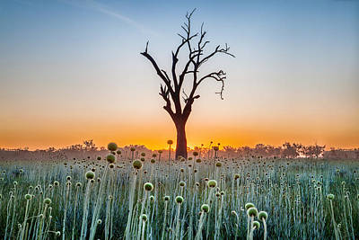 Sunrise Photograph - Family Tree by Az Jackson