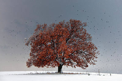 Snowed Trees Photograph - Tree Of Life by Evgeni Dinev