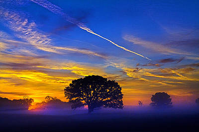 Environement Photograph - Tree Of Life by Phil Koch