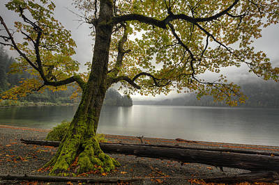 Tree On Cameron Lake Print by Mark Kiver