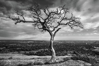 Tree On Enchanted Rock In Black And White Print by Todd Aaron