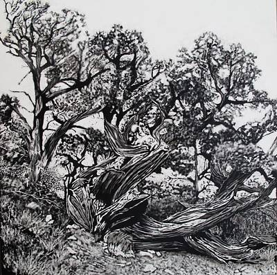 Scratchboard Painting - Tree Portrait No. 1 by Mattie O