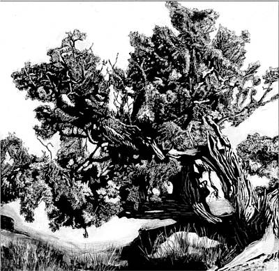 Scratchboard Painting - Tree Portrait No. 2 by Mattie O