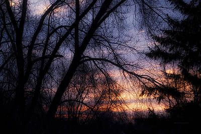 Tree Silhouette At Sunrise Print by Thomas Woolworth