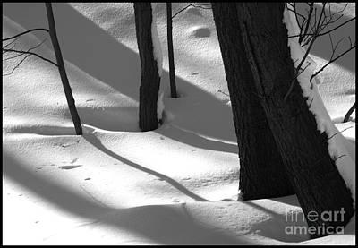 Tree Snow Shadows Print by Rhea Malinofsky