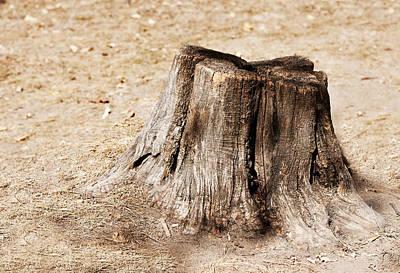 Tree Stump Print by Boyan Dimitrov