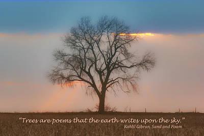 Tree - Sunset - Quotation Print by Nikolyn McDonald