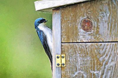 Swallow Digital Art - Tree Swallow At Nesting Box by Sharon Talson