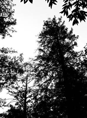 Tree Tops In Monotone Print by Grace Dillon