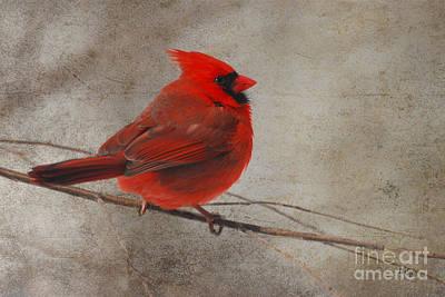 Cardinal Digital Art - Tree Treasure by Lois Bryan