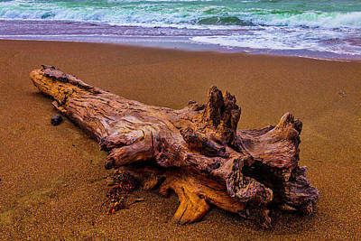 Luis Photograph - Tree Trunk Driftwood by Garry Gay