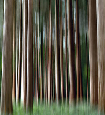 Nature Abstract Photograph - Tree Trunks by Wim Lanclus