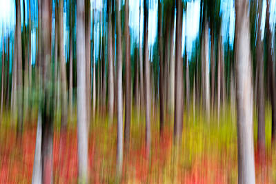 Rgb Photograph - Treecolour by Gert Lavsen