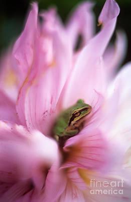 Treefrog In Flower 2 Original by David Nunuk